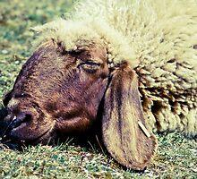 Sleeping Sheep by Liev