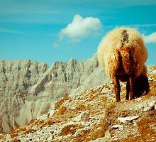 Sheep by Liev
