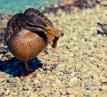 Duck and Sparrow by Liev