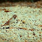 Sparrow 1 by Liev