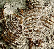Sand Print by Mandi  Ruch