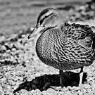 Duck 3 by Liev
