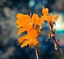 Flower by Liev