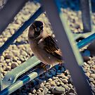 Sparrow 4 by Liev