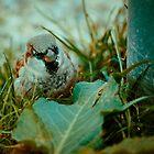 Sparrow 5 by Liev