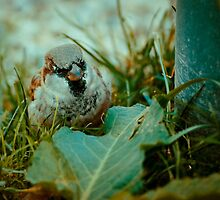 Sparrow 5 by Liev