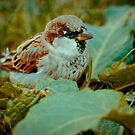 Sparrow 6 by Liev