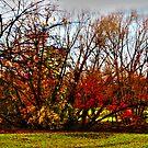 Autumn In Brooklyn by Mistyarts