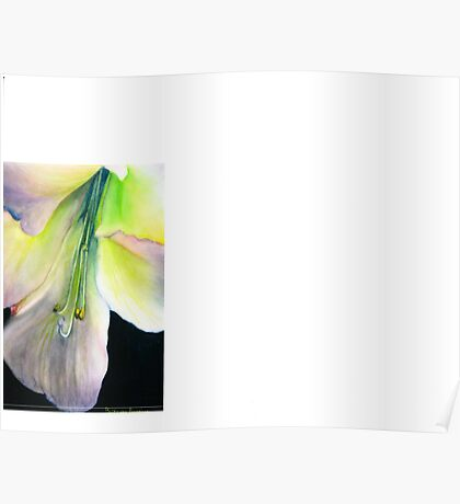 work #2 from the Amaryllis series in Watercolor on Claybord Poster