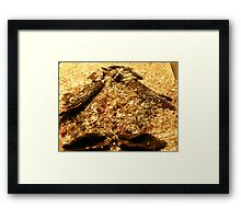 SNOW PENGUIN 9 - Happy Feet Framed Print