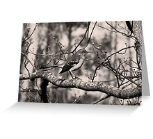 Mocking Bird Greeting Card