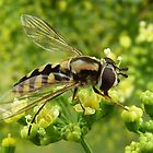 Hover Fly 1 by Erika Lieftink