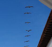 Pelicans above the beach of Puerto Vallarta by Bernhard Matejka