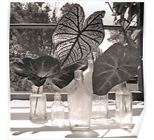 Three Caladium Leafs Poster