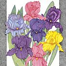 Dots of Irises by Judy Newcomb