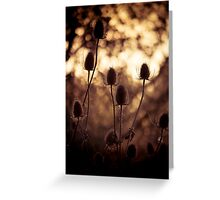 Teasels Greeting Card