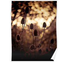Teasels Poster