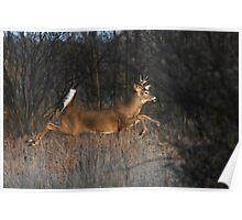 Flight of Fancy - White-tailed Deer Poster