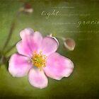 Grape Leaf Anemone by JulieLegg