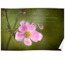 Grape Leaf Anemone Poster