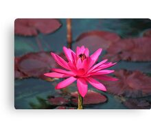 Water Lilie  Canvas Print