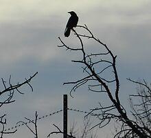 Crow by Marijane  Moyer