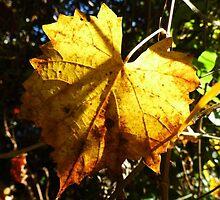 Gold Leaf by WildestArt