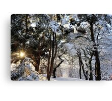 Icy Beauty Canvas Print