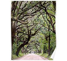 Edisto Island, South Carolina Poster