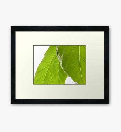 Hibiscus Leaves Framed Print