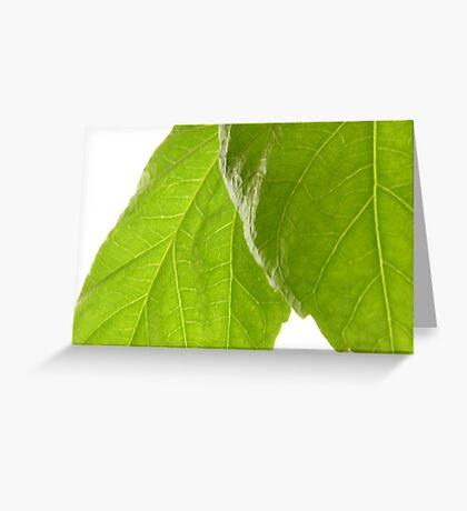 Hibiscus Leaves Greeting Card