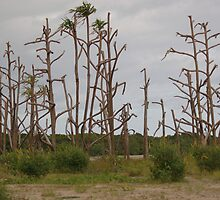 Dead Forest by Jan  Stroup ~ Photojournalist