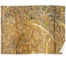 Scenes of Fall - Dried Grass in Morning Sun Poster