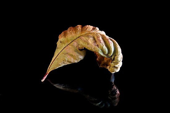 Leaf... by Ubernoobz
