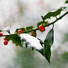 Berries by Adam Lack