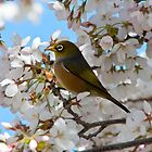 Waxeye  by Ubernoobz