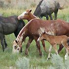 Wild Ponies - Theodore Roosevelt National Park by David Galson
