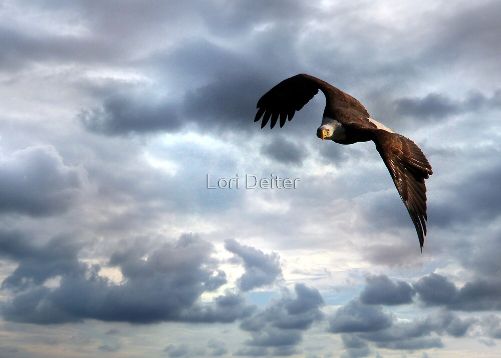 Thank You for Our Freedom by Lori Deiter