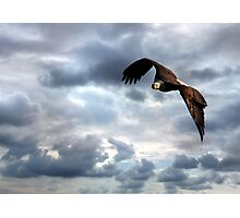 Thank You for Our Freedom Photographic Print
