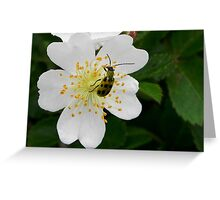 Wild Rose and Beetle Greeting Card