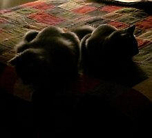 Shady cats by Mike Shell