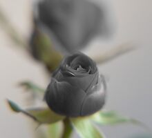 A black rose for your sweetheart... by pASob-dESIGN