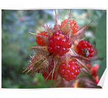 Wild Raspberries Poster