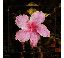 Pretty Pink I Photographic Print