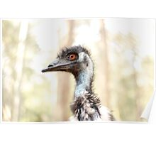 Emu - Newcastle Poster