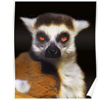 Ring-Tailed Lemur - Painting Poster
