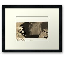 Equestrian Beauty Framed Print