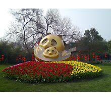 Panda base Photographic Print