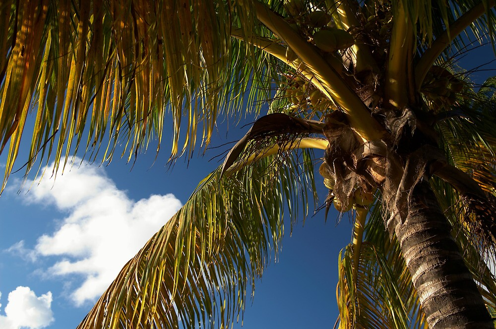 Tropical by Trevor King