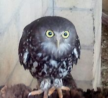 Hoo's there?! by Bronwyn Day